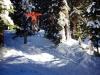 Rogers Run Tree Rail - Vail, CO